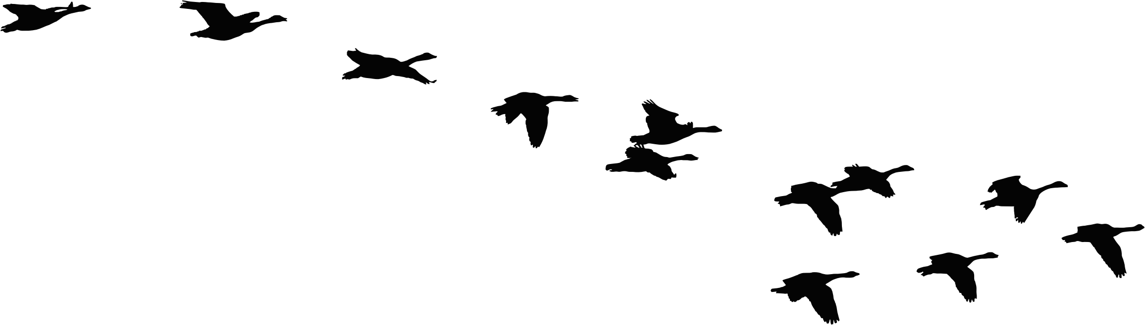 2312x658 Flock Of Flying Geese Silhouette Icons Png