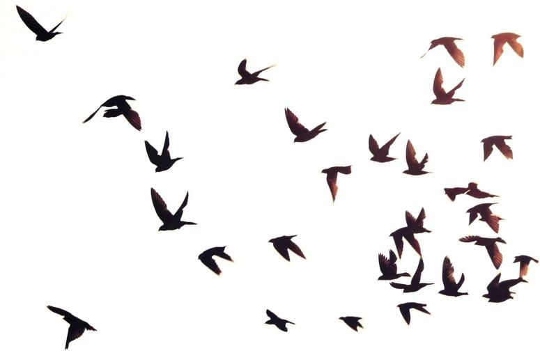 775x520 Bird In Flight Silhouette Out Of Birds Fly Over By Attic