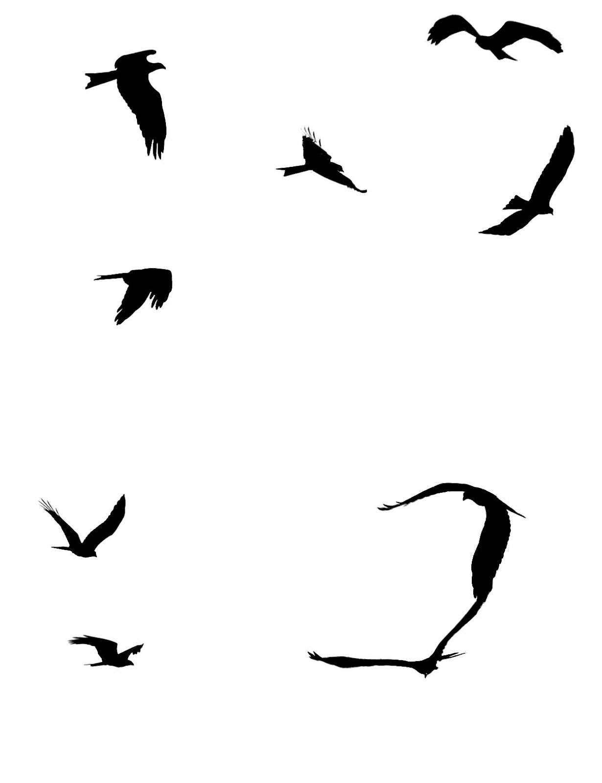 1230x1600 Stock Pictures Silhouettes Of Birds In Flight