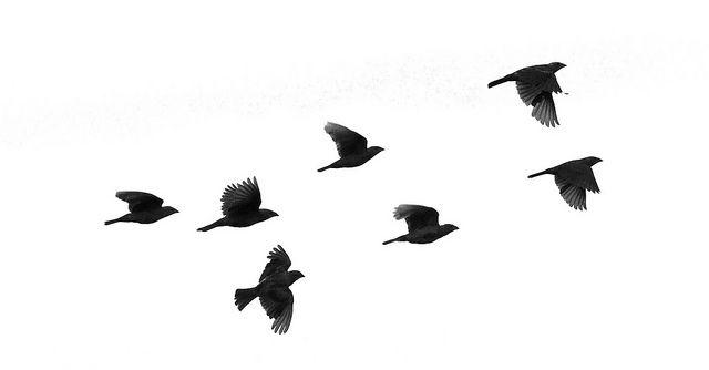 Bird In Flight Silhouette Clip Art at GetDrawings.com ...