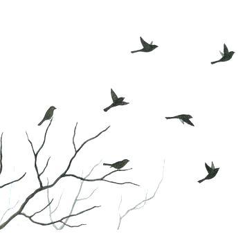 354x354 Bird On Branch Silhouette Or Bird Sitting On Spruce Branch