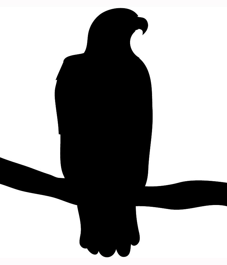 754x879 Eagle Silhouette Eagle On Branch Looking For Prey Silhouette