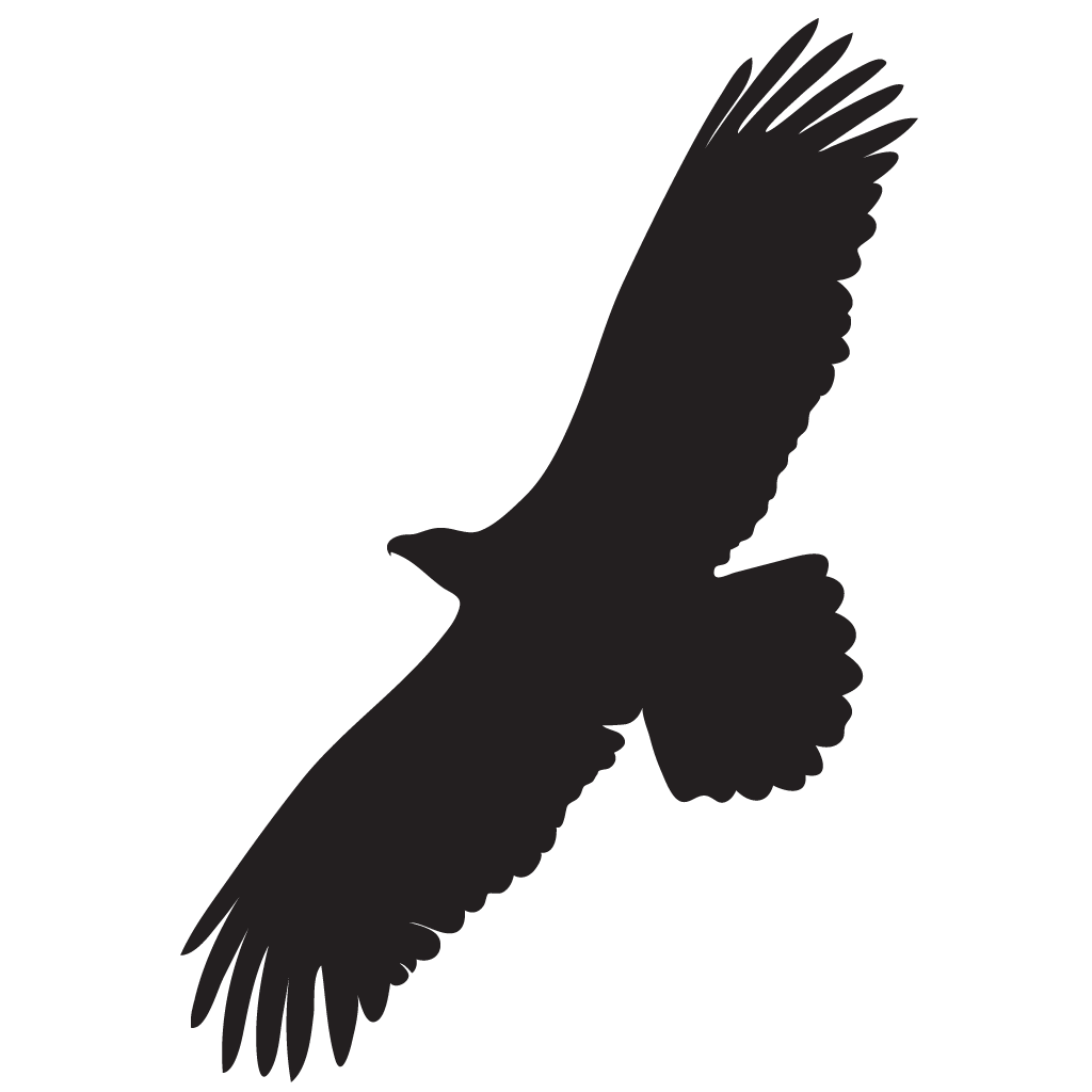 1024x1024 Golden Eagle Overview, All About Birds, Cornell Lab Of Ornithology