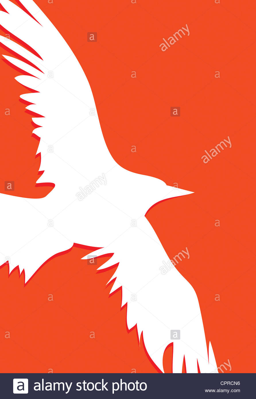 892x1390 White Silhouette Of A Flying Bird Of Prey Stock Photo 48458066