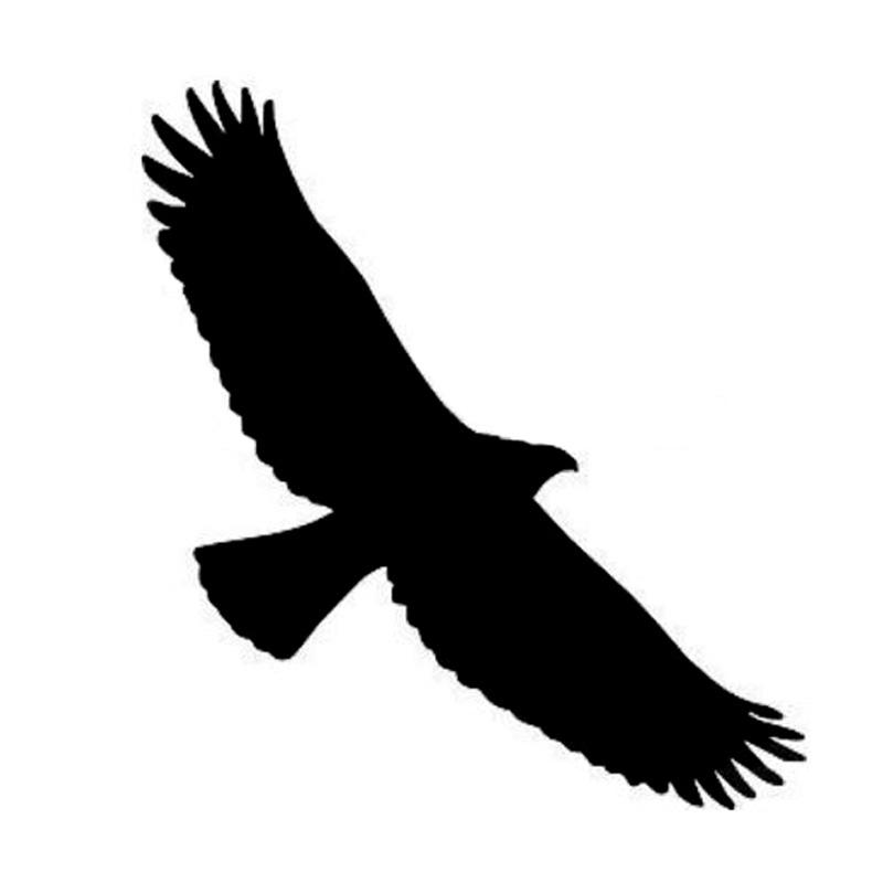 800x800 Black Eagle Clipart Bird Prey