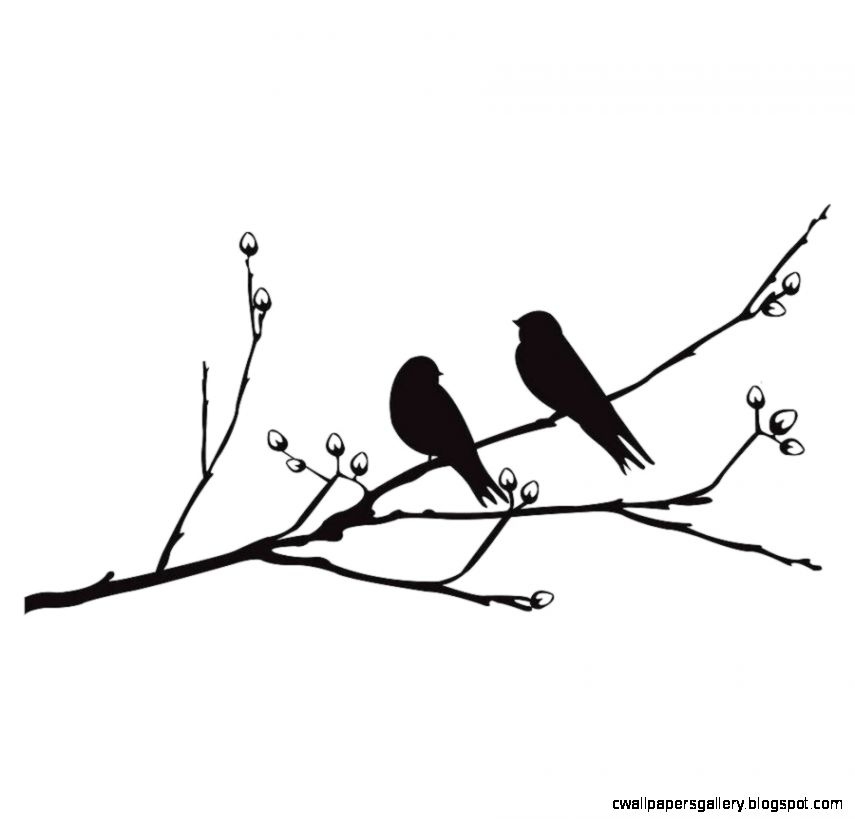 855x819 Bird On Branch Silhouette Wallpapers Gallery