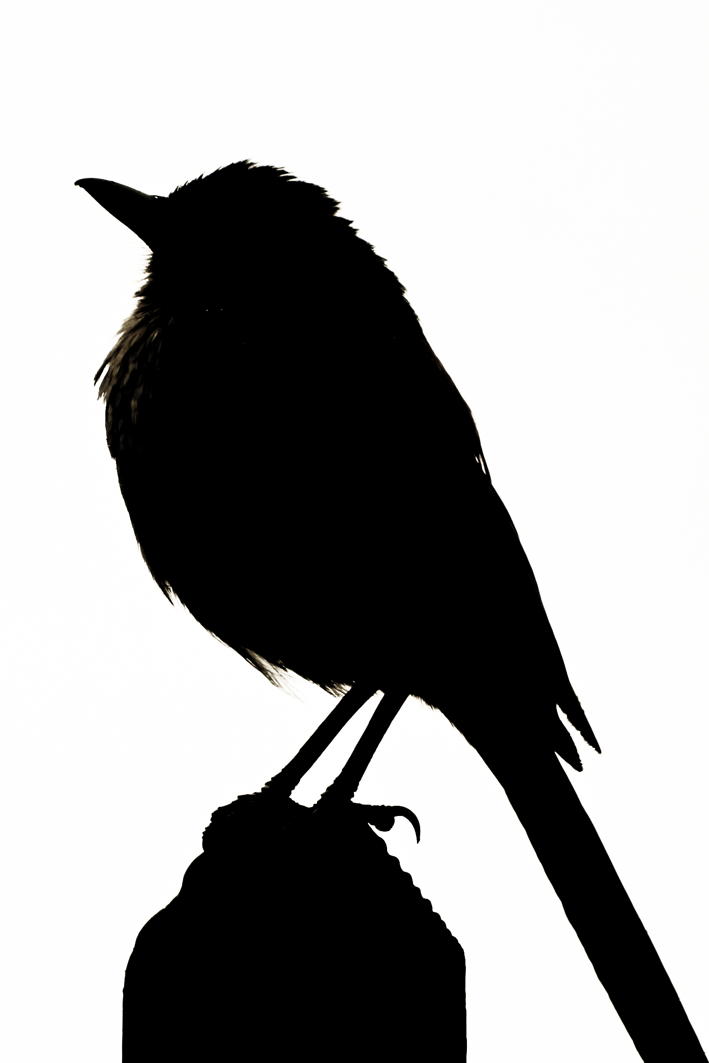 Bird On A Wire Silhouette at GetDrawings.com | Free for ...