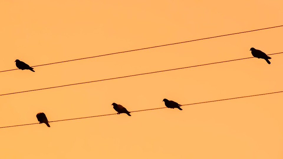 960x540 Free Photo Sunset Birds Orange Pigeons Wire Nature