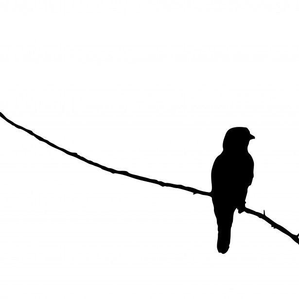 615x615 Bird On Branch Silhouette