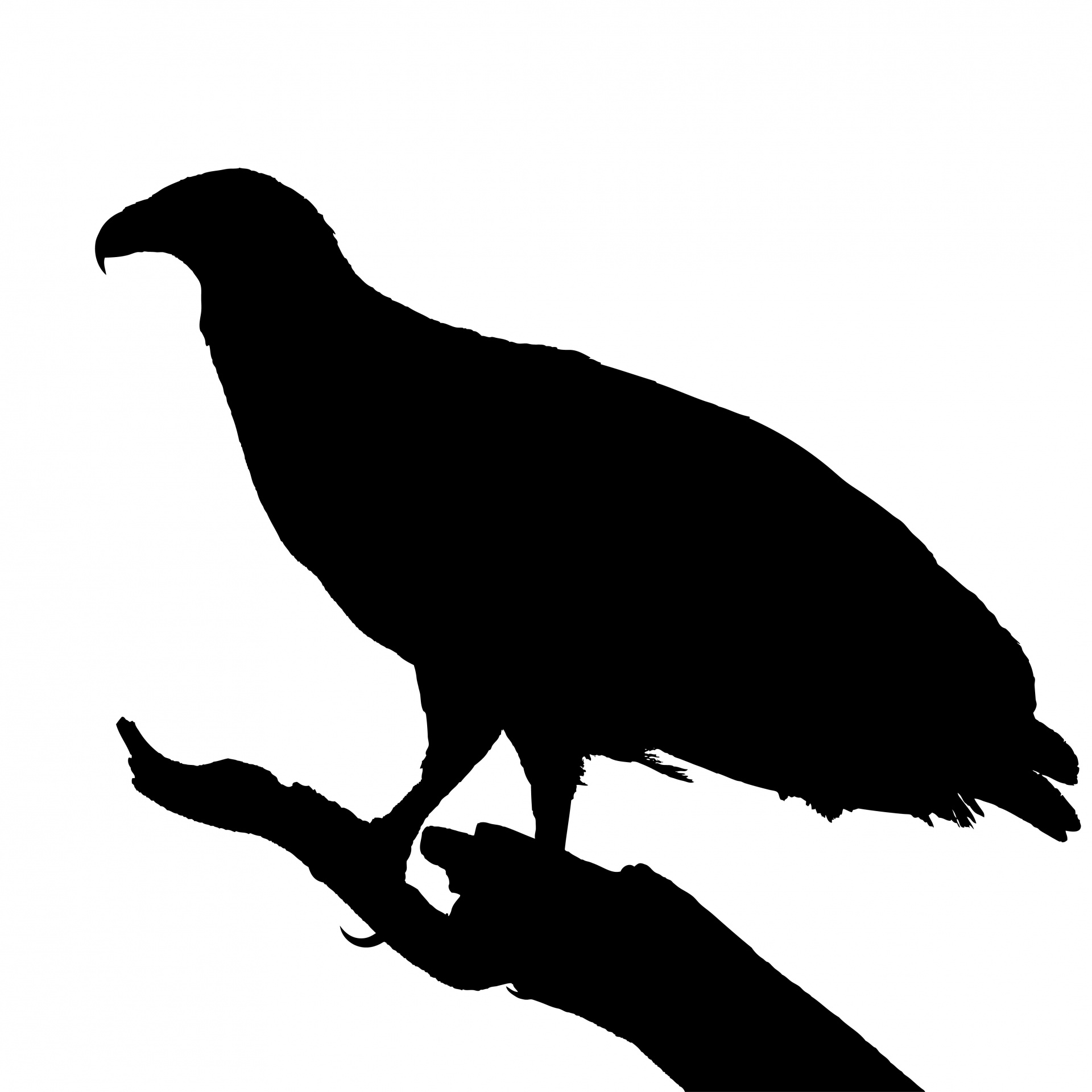 1920x1920 Bird On Branch Silhouette Free Stock Photo