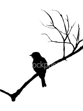 285x380 Silhouette Of A Bird On Branch Silhouette, Bird And Glass Etching