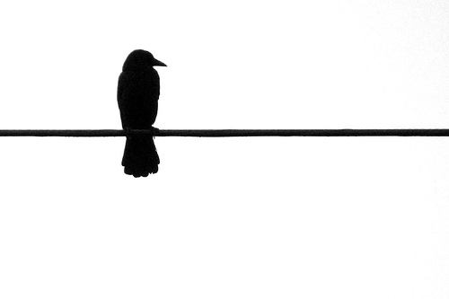 Bird On Wire Silhouette