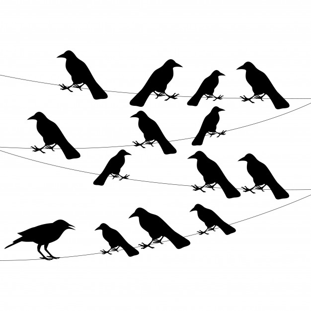 626x626 Bird Wire Vectors, Photos And Psd Files Free Download