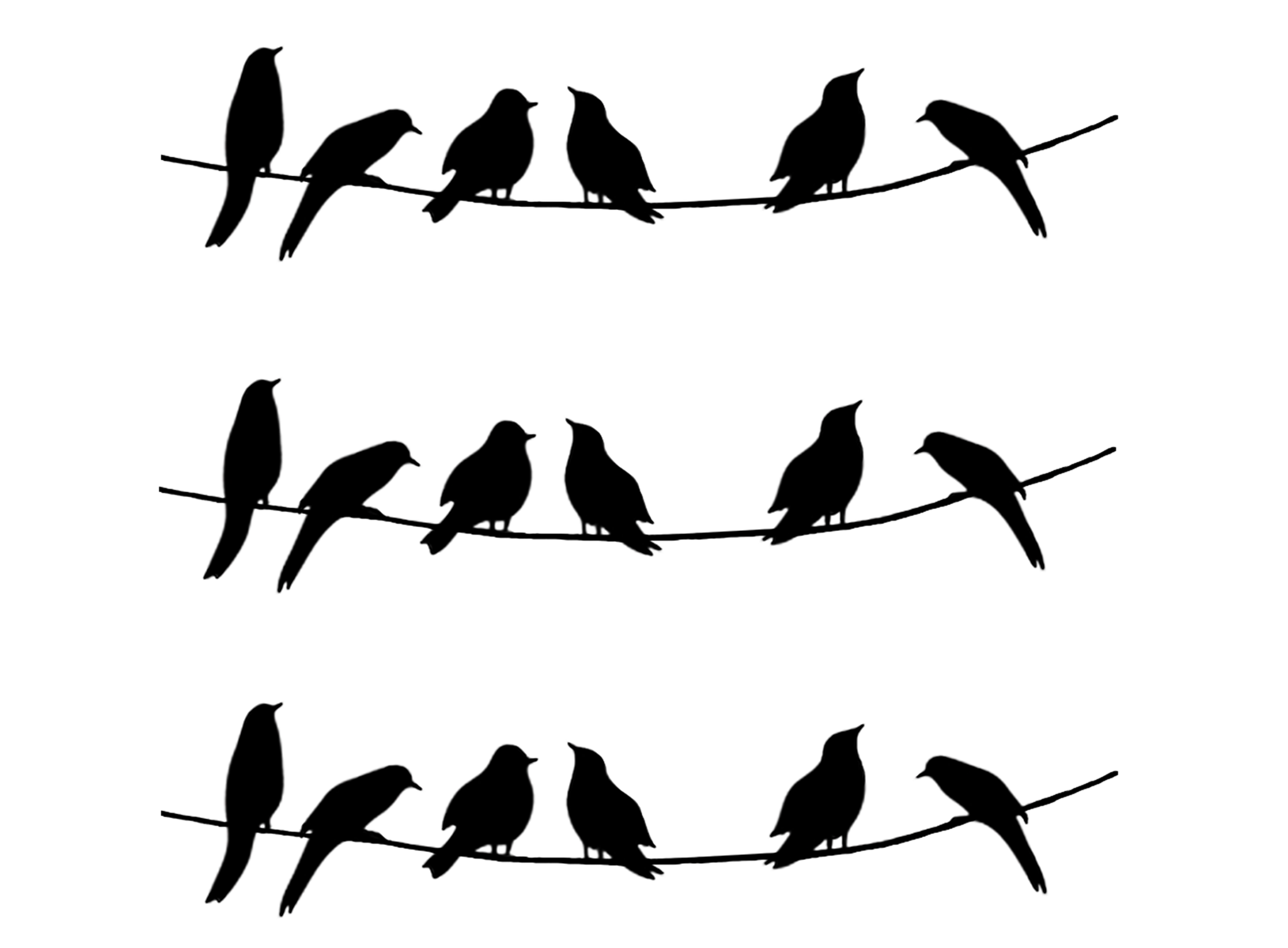 2048x1507 Barrette Birds On Wire Medium 3 Pcs 3 14 Black