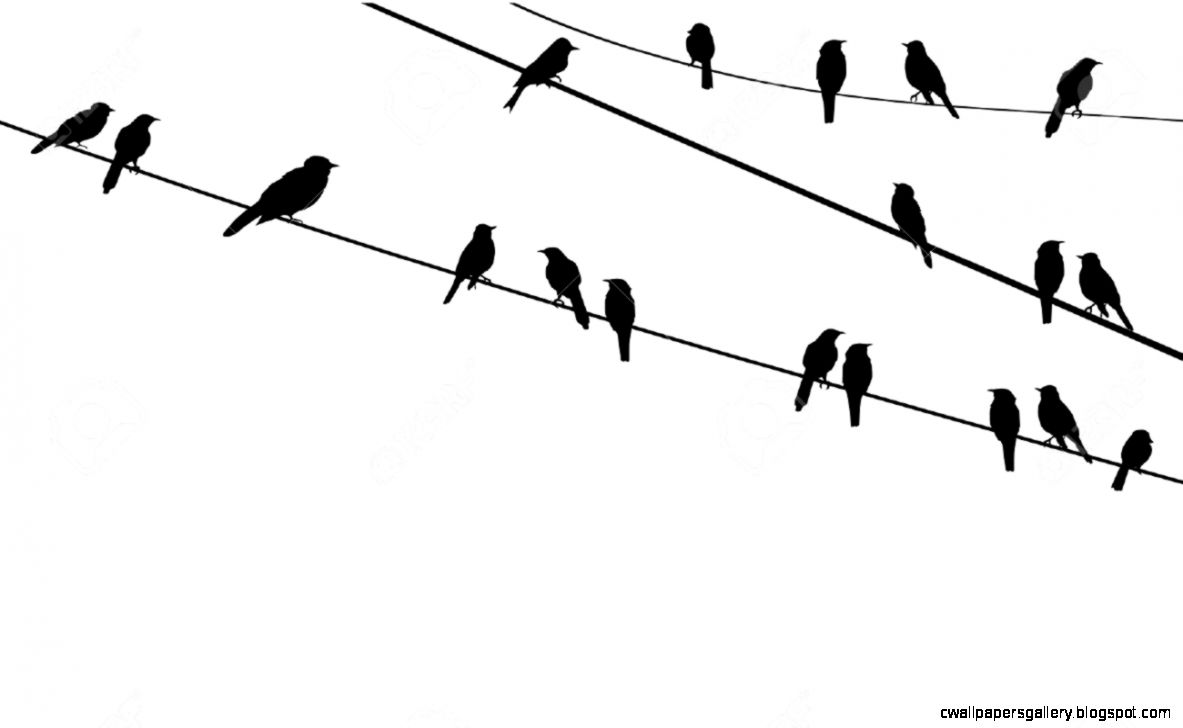 Bird On Wire Silhouette At Getdrawings Free Download