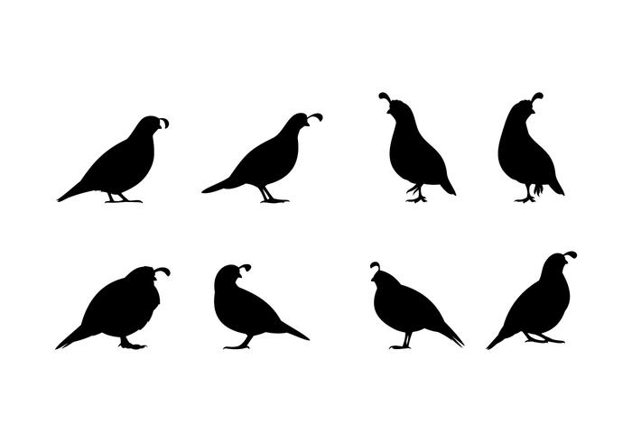 700x490 Standing Quail Silhouette Free Vector