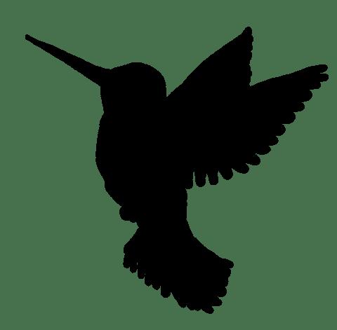 480x471 Hummingbird Silhouette Transparent Png