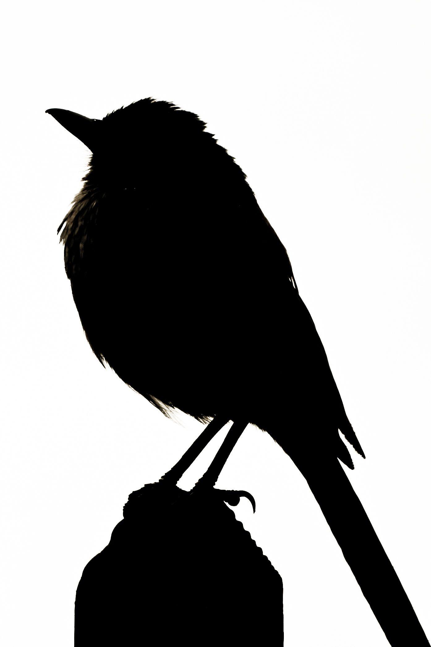 1394x2091 Bird Silhouette Silouetten Silhouettes, Bird
