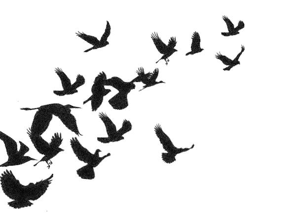 600x438 Black Bird Flying Drawing