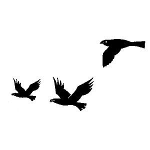 300x300 Black Bird In Flight Clipart Mydrlynx