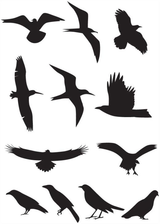520x727 Bird Silhouette Flying Clipart