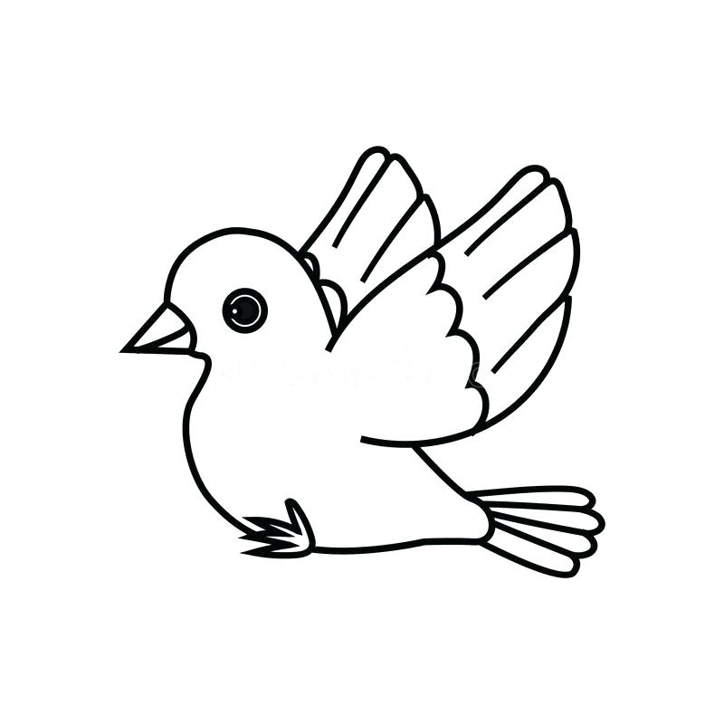 800x800 Bird Outline Download Flying Bird Outline Ready To Perch Stock