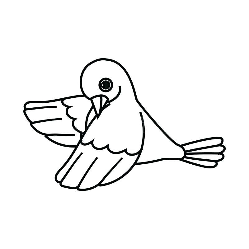 800x800 Dove Drawing Images At Free For Personal Use Dove Vector