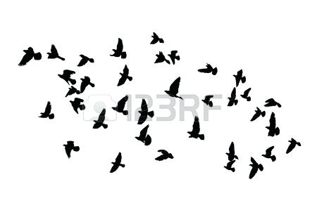 450x306 Outline Of Birds Simple Bird Outline Outline Picture Of Flying