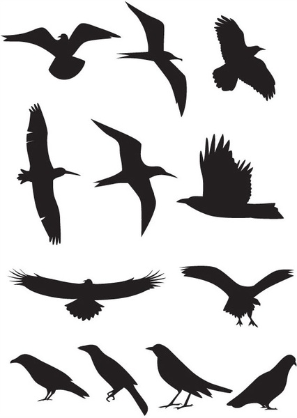 426x600 Bird Silhouette Vector Free Vector In Encapsulated Postscript Eps