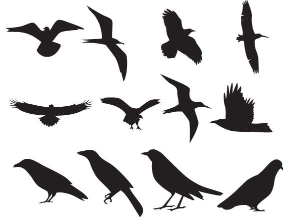 598x445 Birds Vector Silhouette Free Vectors Amp Graphics