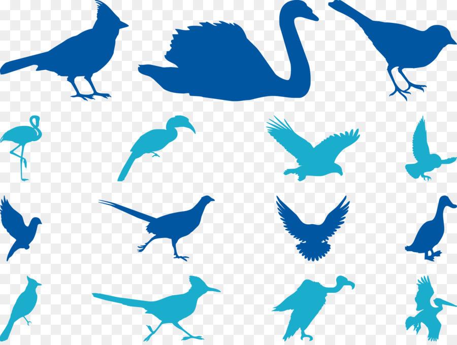 900x680 Bird Cygnini Sparrow Goose Beak