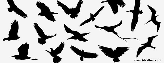 676x259 Free Vector Bird Silhouettes