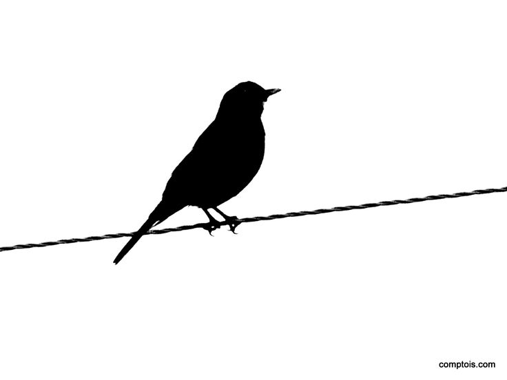 Bird Sitting Silhouette