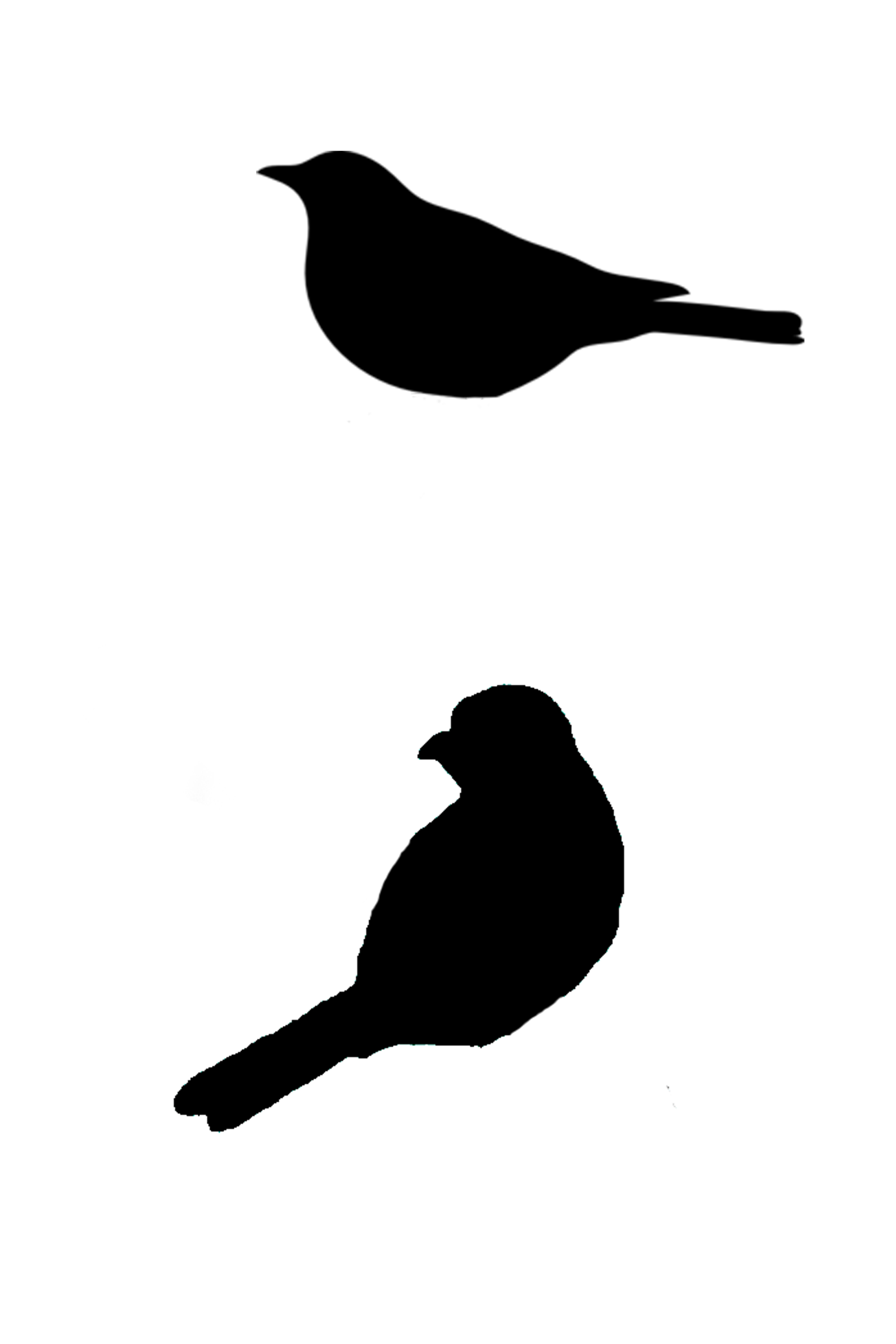 6096x9144 Sitting Bird Silhouette, Cut Out For Canvas Art ) Stencils