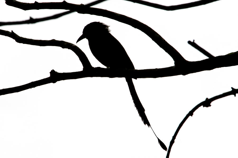 900x600 Bird And Tree Silhouette Photograph By Peggy Collins
