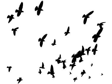 380x285 Birds Flying From Tree Silhouette Clipart