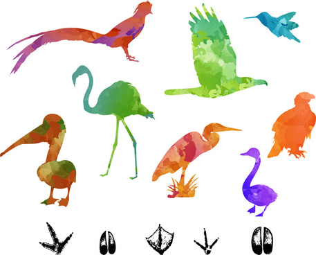 457x368 Colorful Birds Flying Free Vector Download (24,913 Free Vector