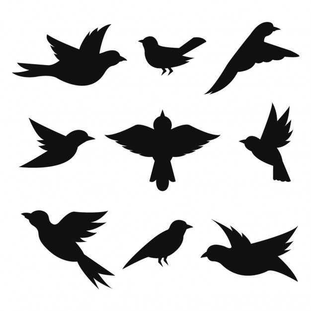626x626 Collection Silhouettes Oiseaux Silhouette, Stenciling And Bobble