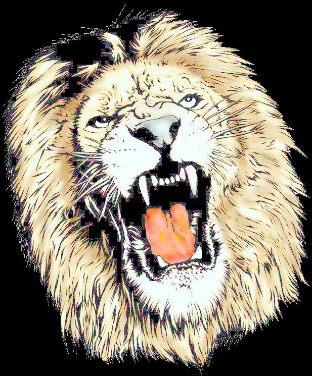 617x745 Lion Head Transparent Png Pictures