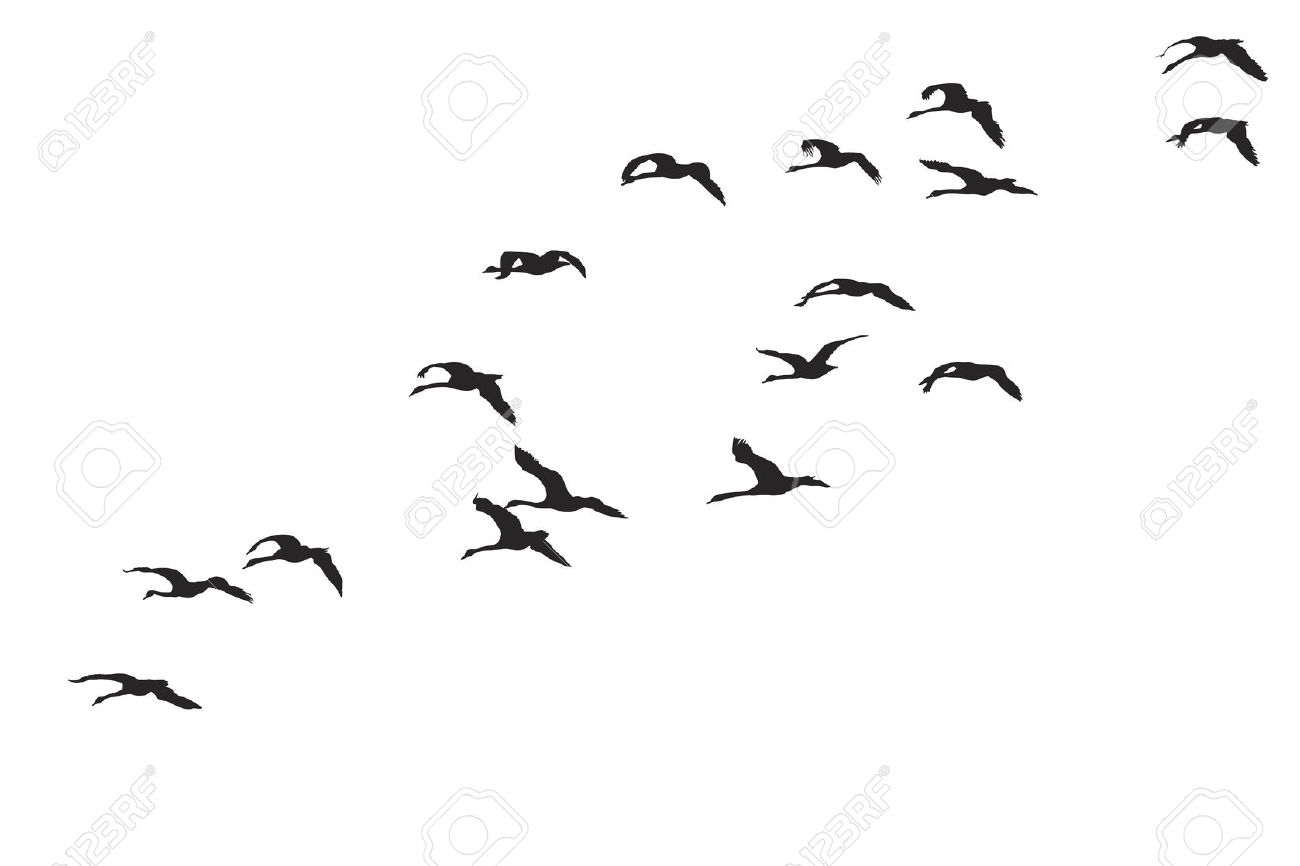 1300x866 Bird Swarm Clipart