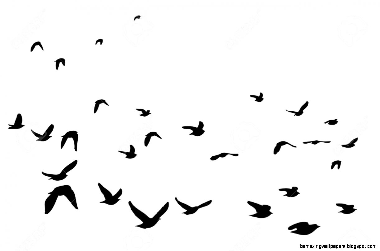 1222x806 Birds Flying Up Silhouette
