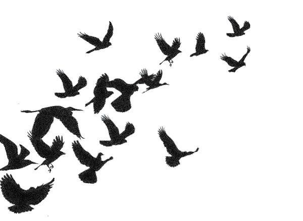 600x438 Black Birds Flying Drawing Flying Blackbird Outline. Black Flying