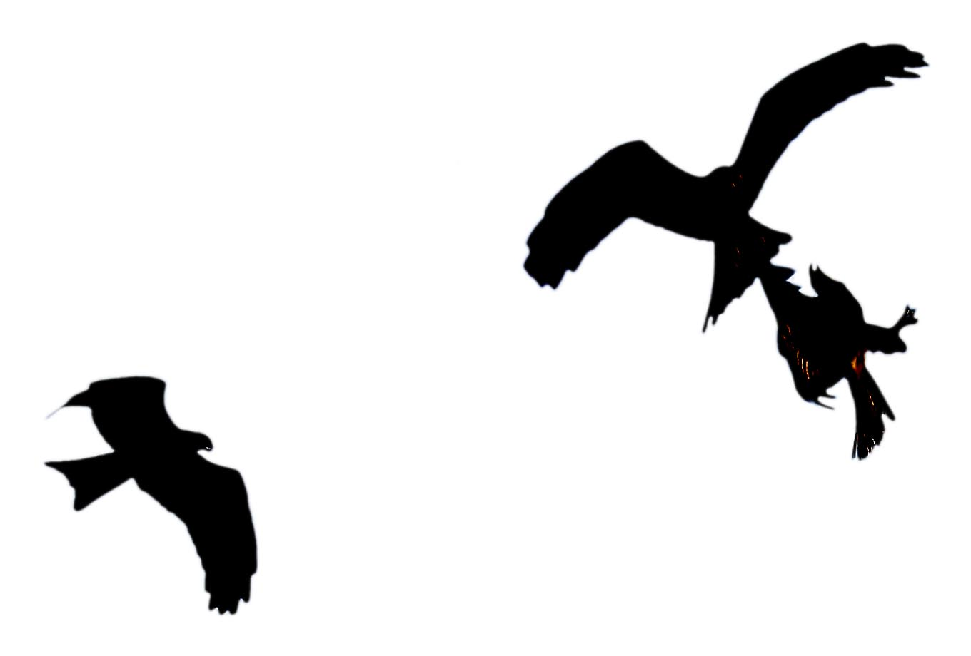1360x920 Stock Pictures Silhouettes Of Birds In Flight