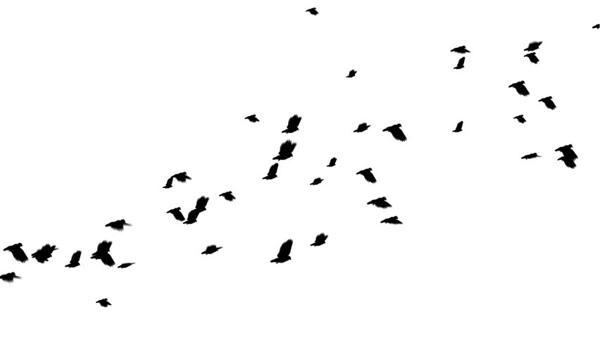 852x480 Bird Fly Free Video Clips