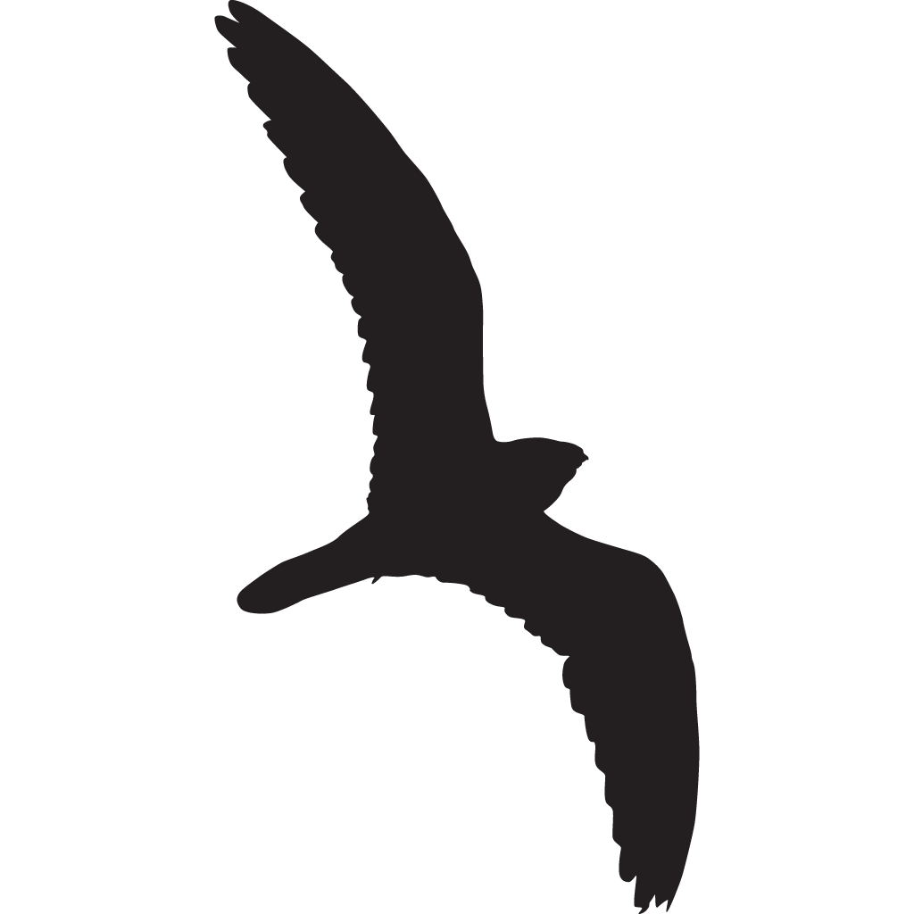 1024x1024 Common Nighthawk Overview, All About Birds, Cornell Lab Of Ornithology