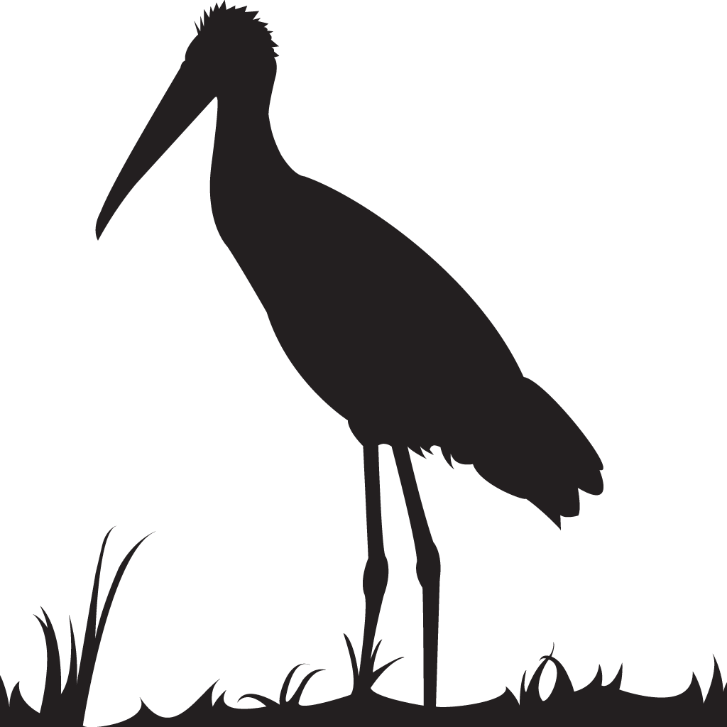 1024x1024 Wood Stork Overview, All About Birds, Cornell Lab Of Ornithology