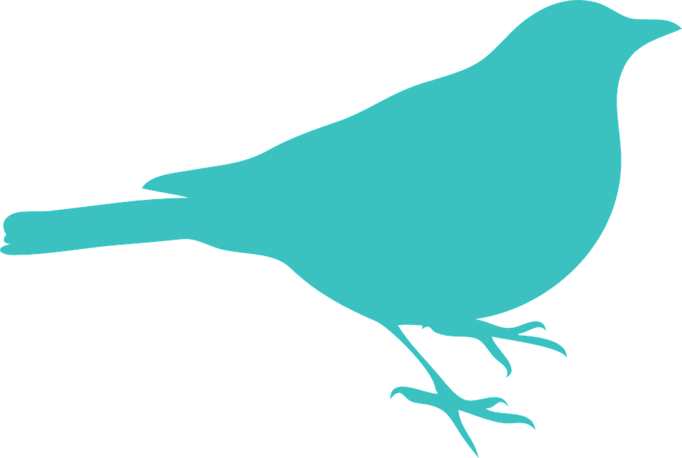 960x644 Turquoise Bird Clipart