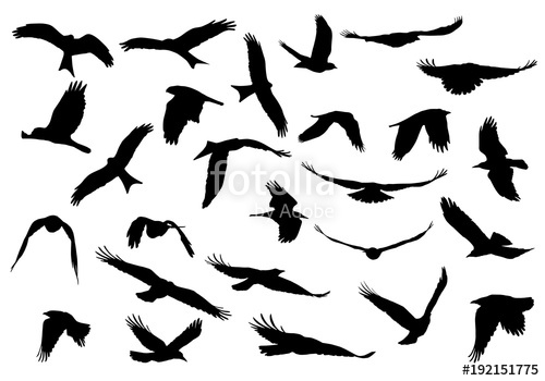 500x350 Set Of Realistic Vector Illustrations Of Silhouettes Of Flying