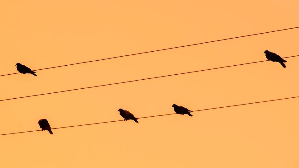 960x540 Free Photo Sunset Birds Orange Pigeons Wire Nature