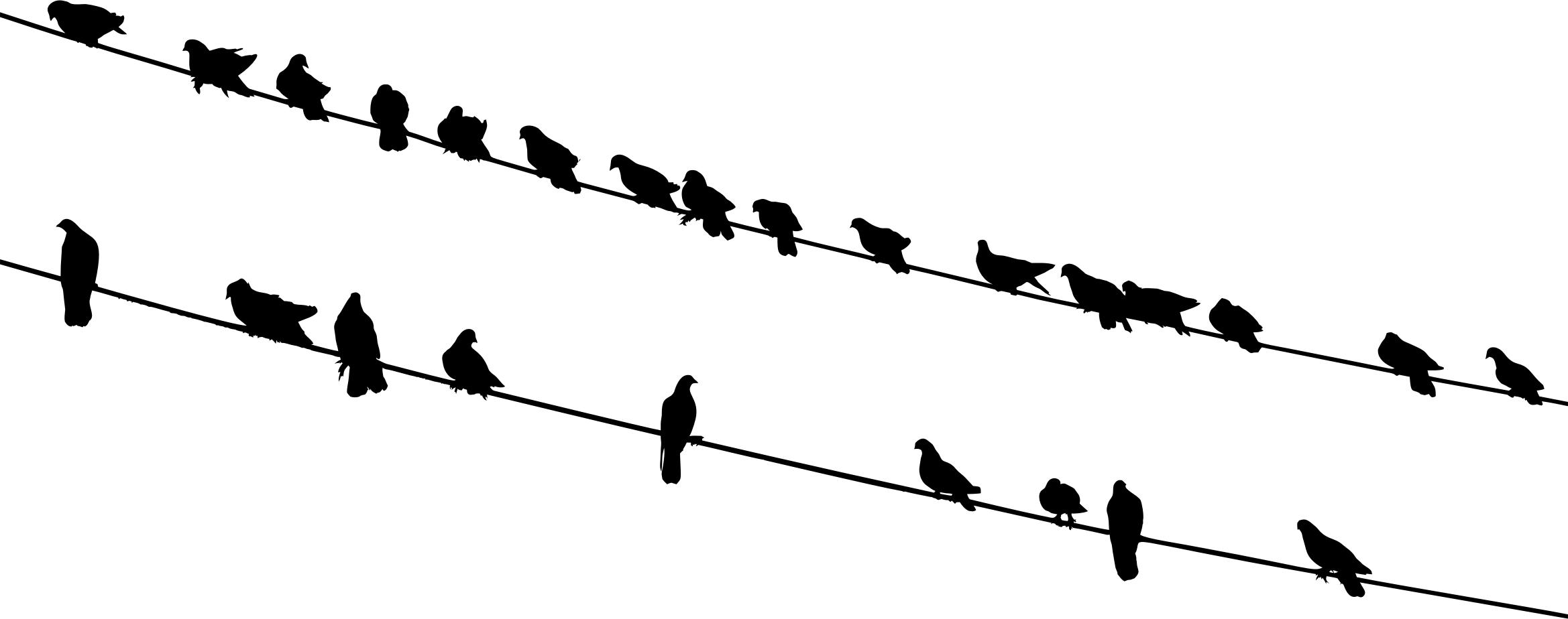 2338x924 Birds On Wires Silhouette Icons Png